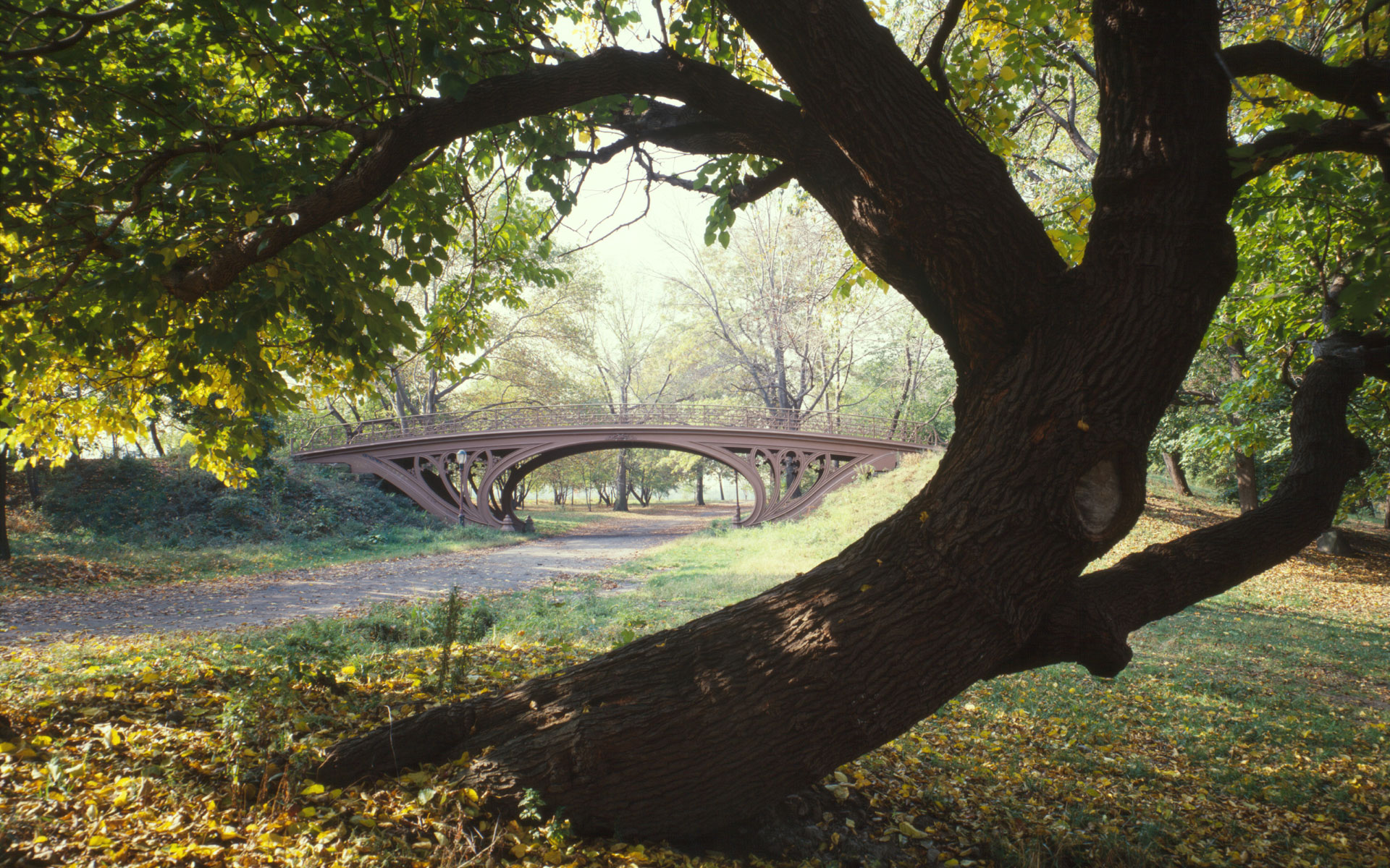 http://environmentalgeography.files.wordpress.com/2009/09/central-park-new-york-city.jpg