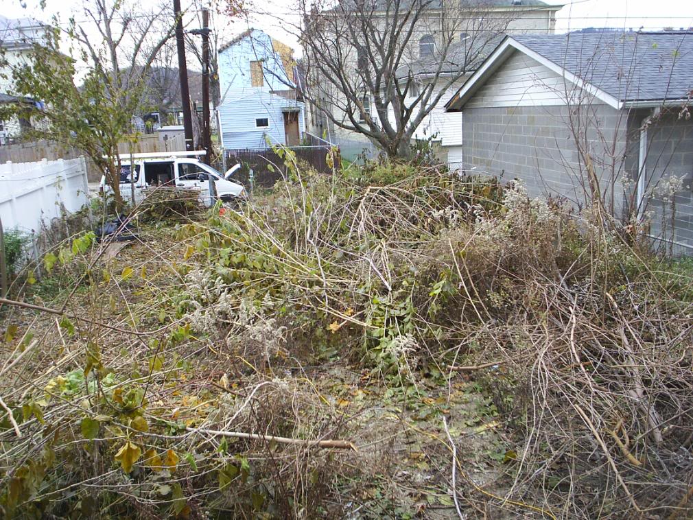 How to Revive an Overgrown Garden  The Handymans Daughter