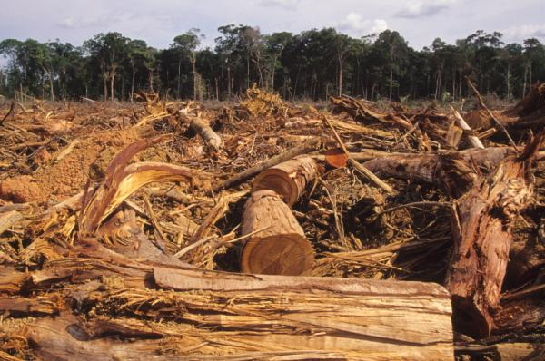 Deforestation Essays and Research Papers