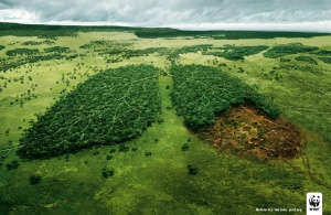 deforestation+and+lungs