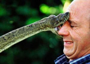 python-snake-bite