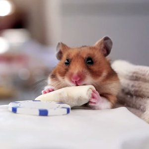 This is a hamster eating a very tiny burrito. He is a very health conscience and environmentally concerned eater.