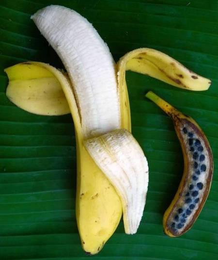 la-sci--banana-02.jpg-20120711