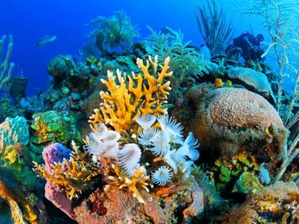 don-wildman-cuba-coral-reef-jpg-rend-tccom-616-462