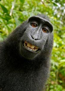 09xp-monkey-blog427